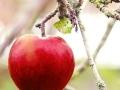 Santa´s Apfel