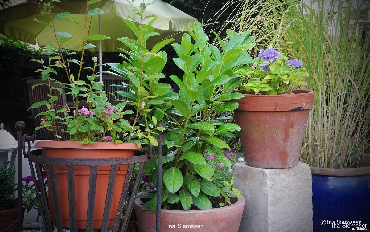 Kuebel-Pflanzen