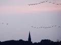 Vögel fliegen gen Süden mit Rathausturm im Hintergrund