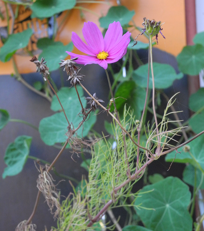 Tante-Suse-Biosk-Blume